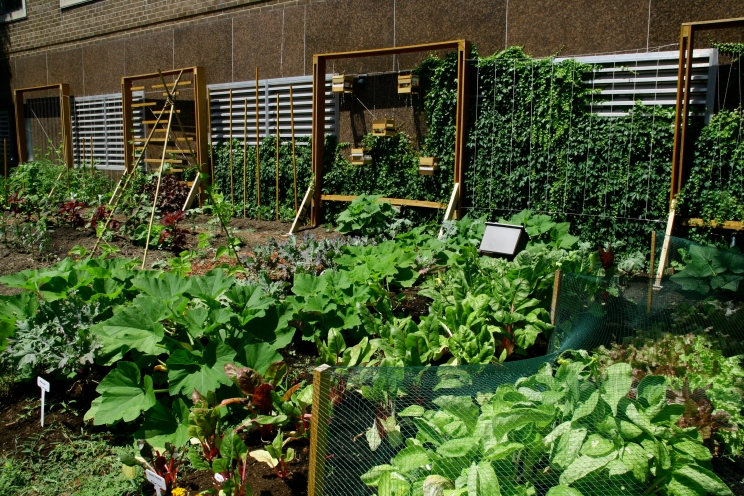 Gould Street Garden 2011. Photo Credit: Nicholas Potovszky