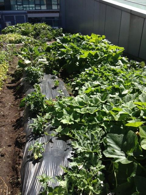 drip irrigation system 2