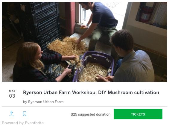 RUF Mushroom workshop.png